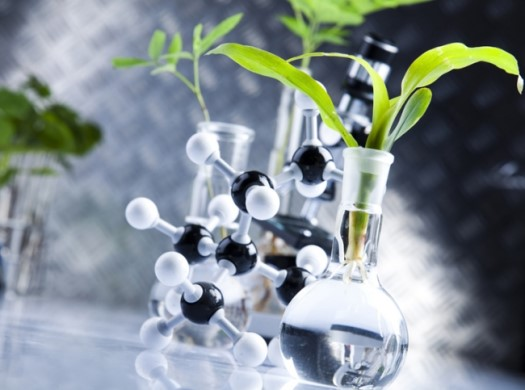 стволовые клетки растений
