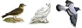 «совы», «жаворонки» и «голуби»